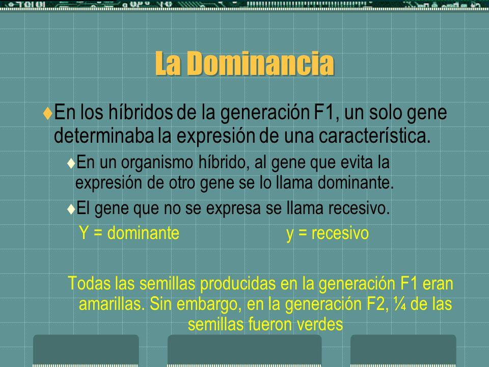 La Dominancia En los híbridos de la generación F1, un solo gene determinaba la expresión de una característica.