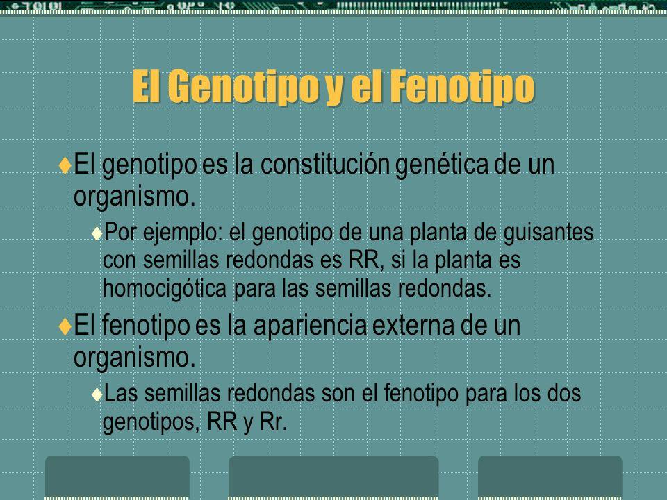 El Genotipo y el Fenotipo