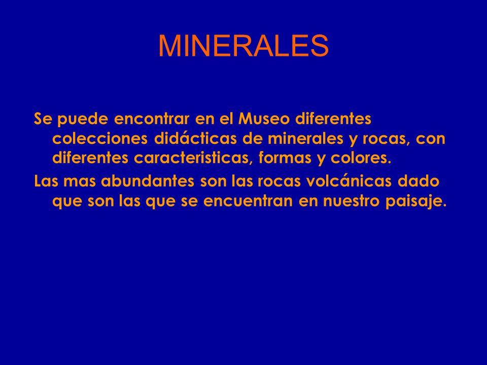 MINERALES Se puede encontrar en el Museo diferentes colecciones didácticas de minerales y rocas, con diferentes caracteristicas, formas y colores.