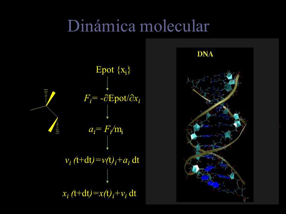 Dinámica molecular Epot {xi} Fi= -∂Epot/∂xi Trayectoria ai= Fi/mi