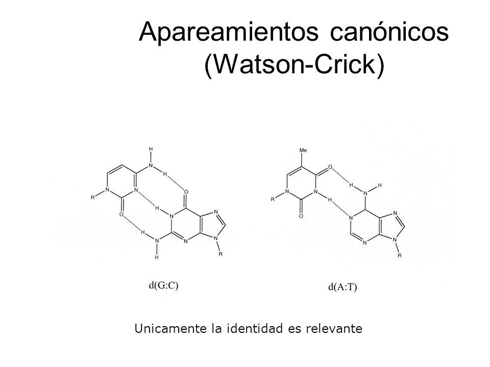 Apareamientos canónicos (Watson-Crick)