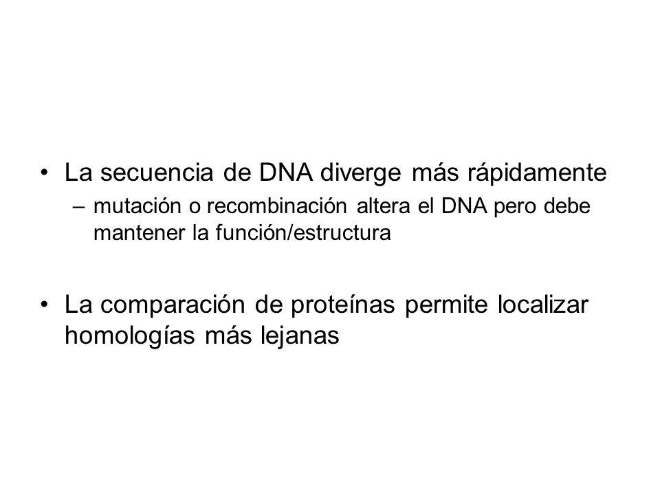 La secuencia de DNA diverge más rápidamente