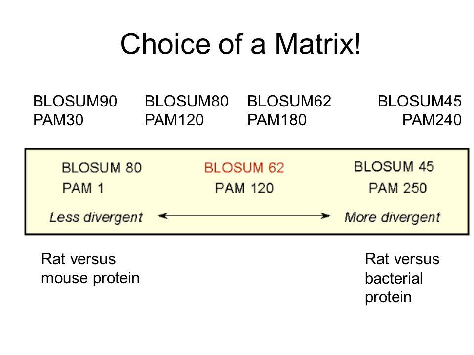 Choice of a Matrix! BLOSUM90 PAM30 BLOSUM80 PAM120 BLOSUM62 PAM180