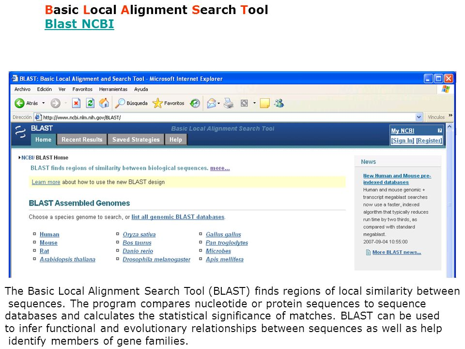 Basic Local Alignment Search Tool Blast NCBI