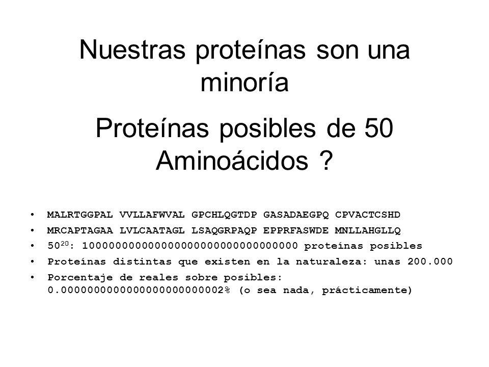 Proteínas posibles de 50 Aminoácidos