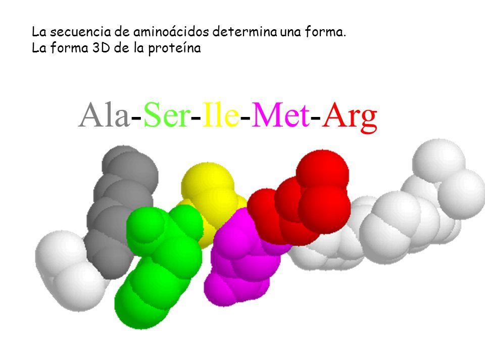 -----Ala-Ser-Ile-Met-Arg------