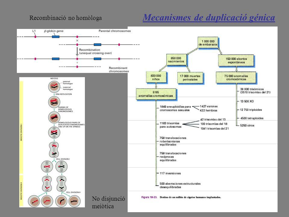 Mecanismes de duplicació génica