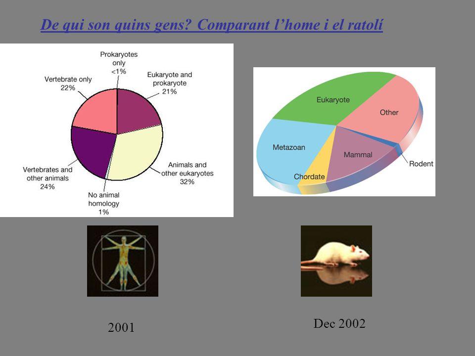 De qui son quins gens Comparant l'home i el ratolí