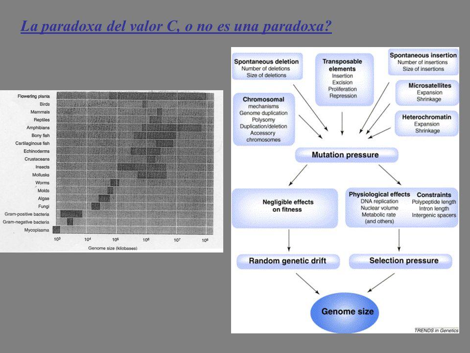 La paradoxa del valor C, o no es una paradoxa