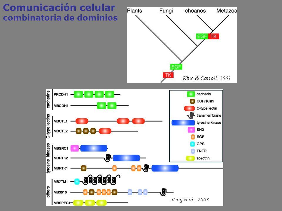Comunicación celular combinatoria de dominios King & Carroll, 2001