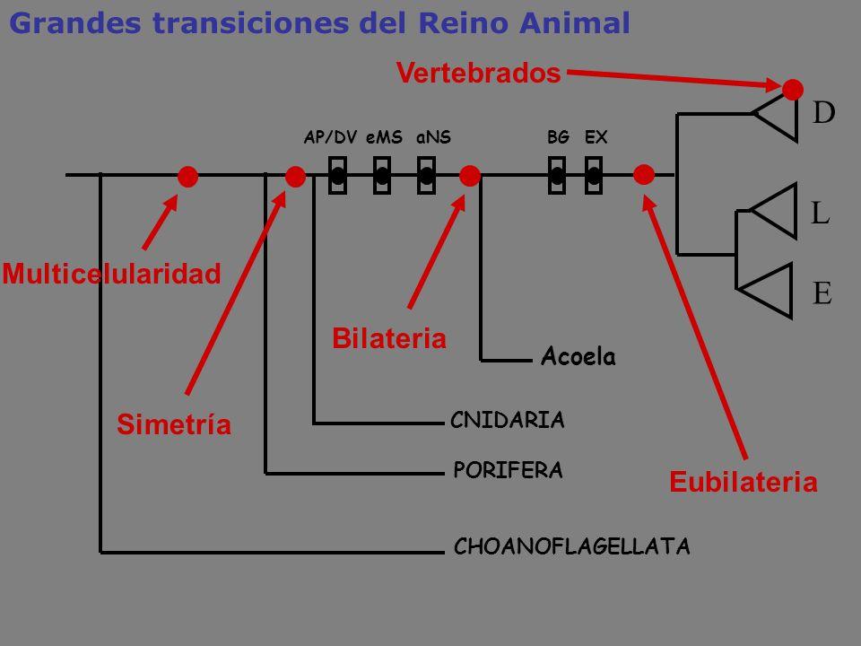 D L E Grandes transiciones del Reino Animal Vertebrados
