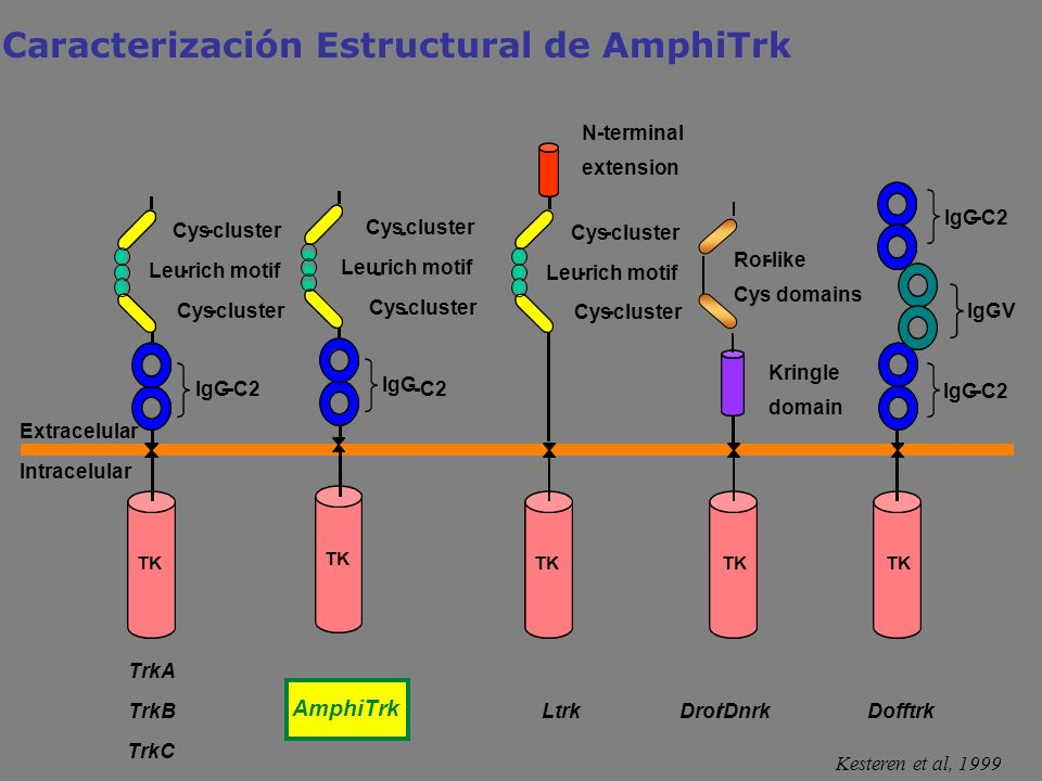 Caracterización Estructural de AmphiTrk