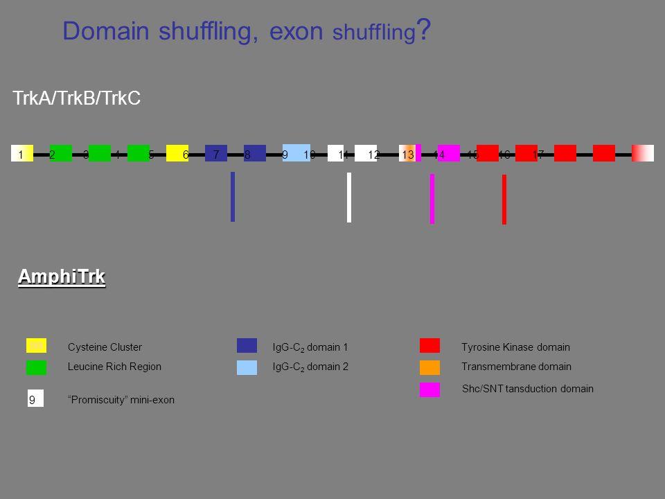 Domain shuffling, exon shuffling