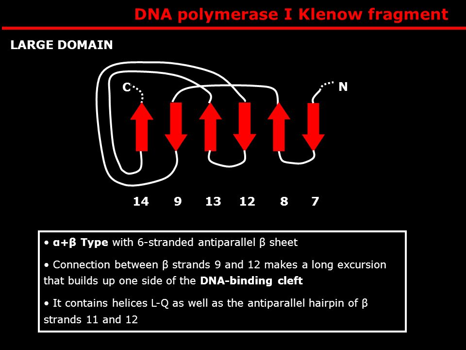 DNA polymerase I Klenow fragment
