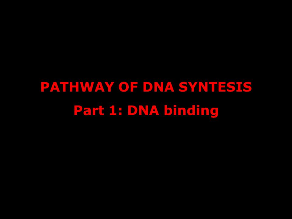PATHWAY OF DNA SYNTESIS