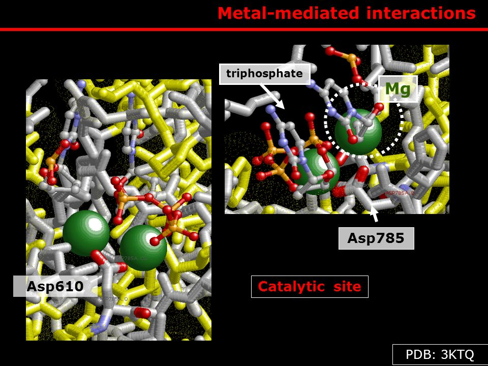 Metal-mediated interactions