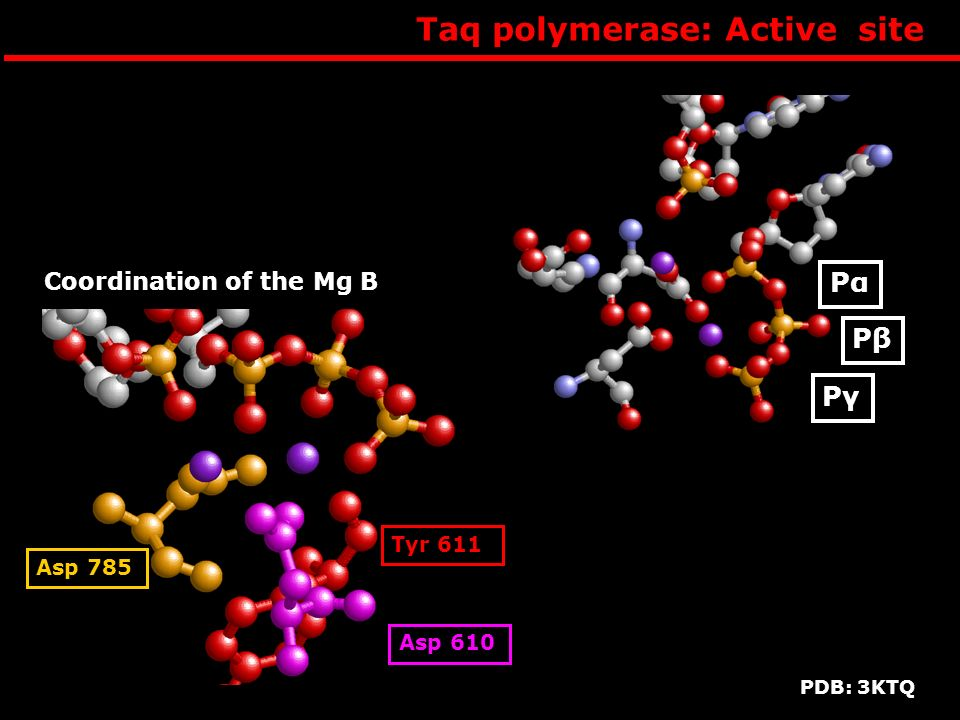 Taq polymerase: Active site