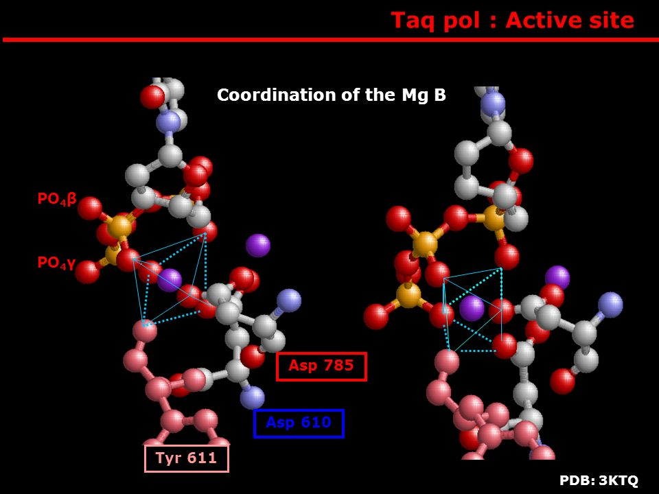 Taq pol : Active site Coordination of the Mg B PO4β PO4α PO4γ Asp 785