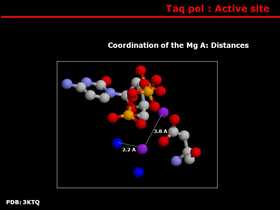 Taq pol : Active site Coordination of the Mg A: Distances PDB: 3KTQ