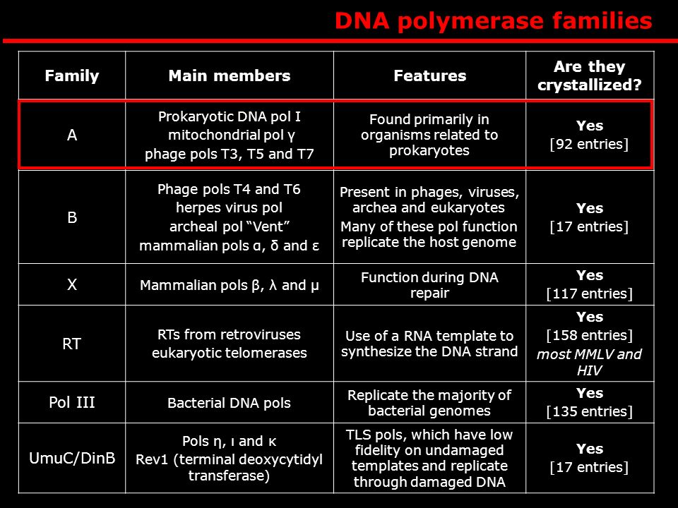 DNA polymerase families