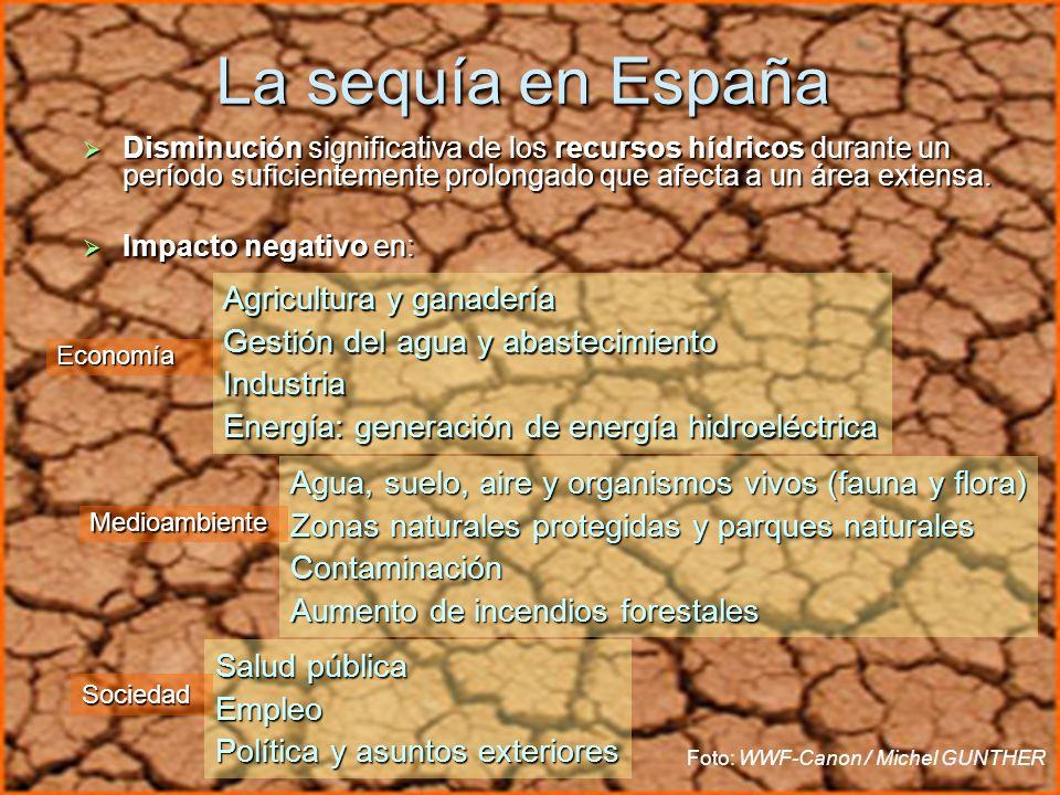 La sequía en España Agricultura y ganadería