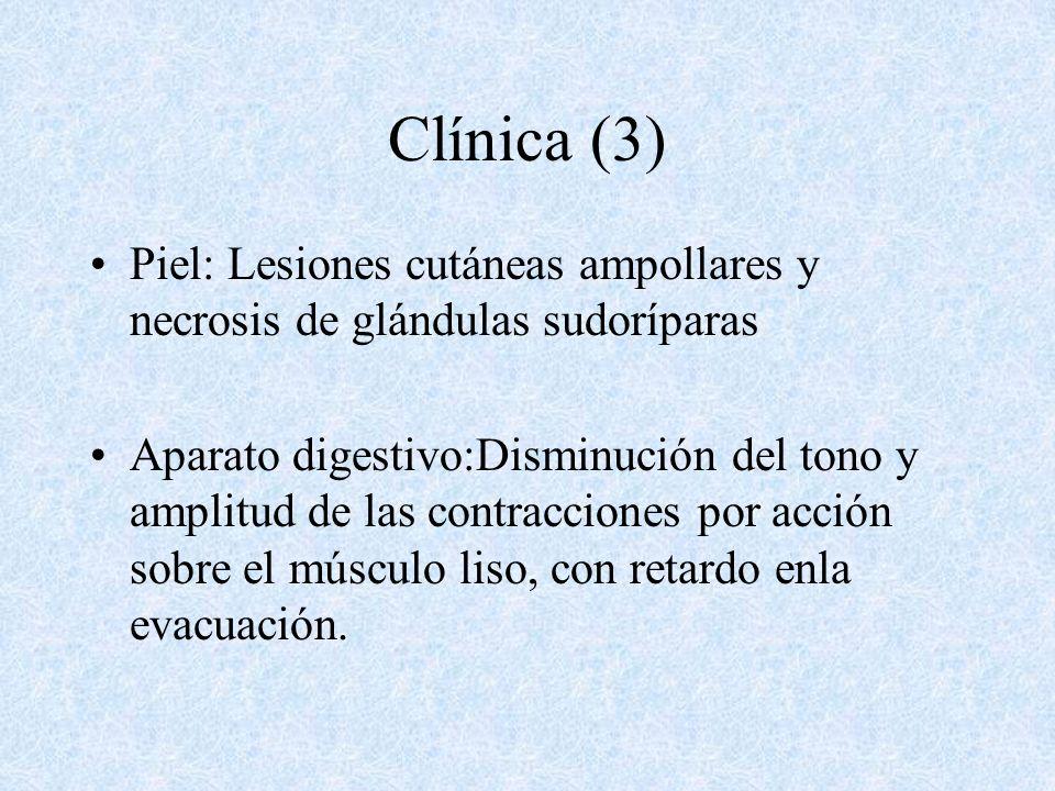 Clínica (3) Piel: Lesiones cutáneas ampollares y necrosis de glándulas sudoríparas.