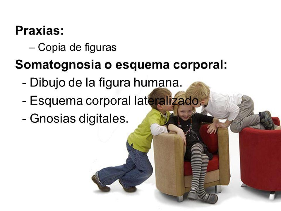 Somatognosia o esquema corporal: - Dibujo de la figura humana.