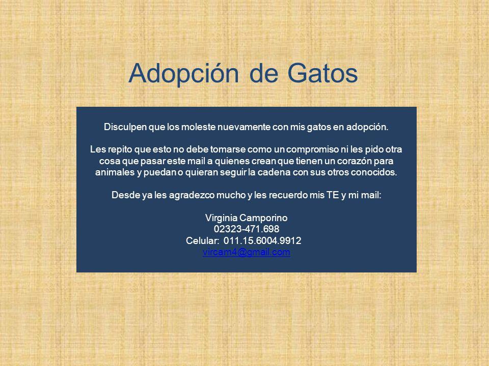 Adopción de GatosDisculpen que los moleste nuevamente con mis gatos en adopción.