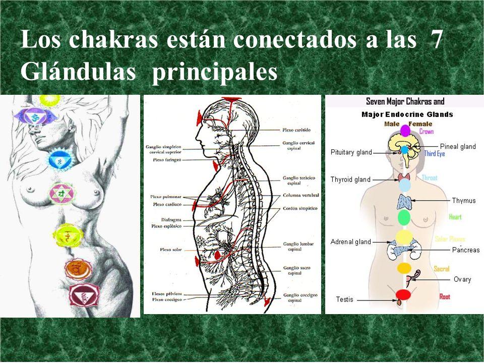 Los chakras están conectados a las 7