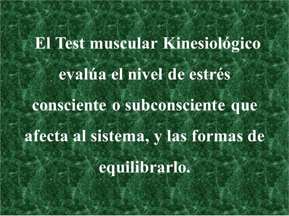 El Test muscular Kinesiológico evalúa el nivel de estrés consciente o subconsciente que afecta al sistema, y las formas de equilibrarlo.