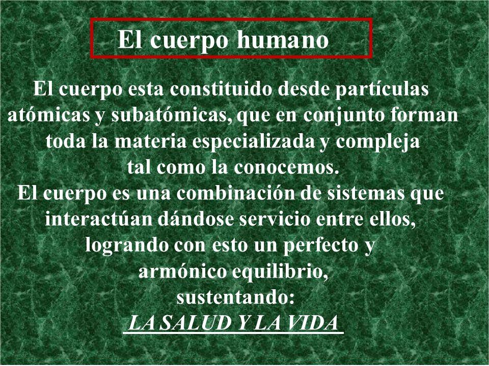 El cuerpo humano El cuerpo esta constituido desde partículas