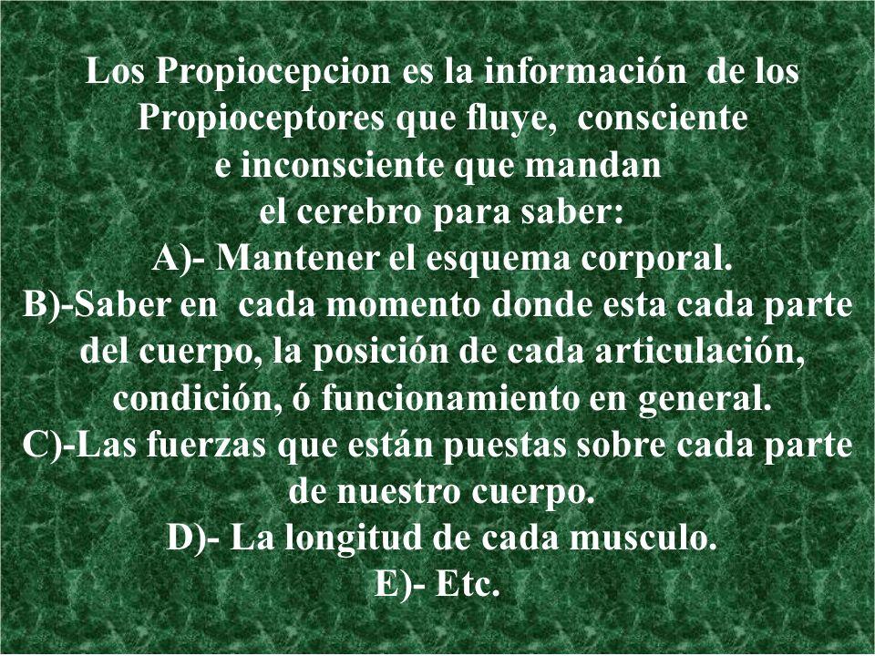 Los Propiocepcion es la información de los