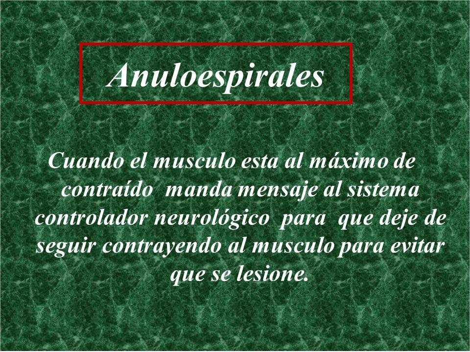 Anuloespirales