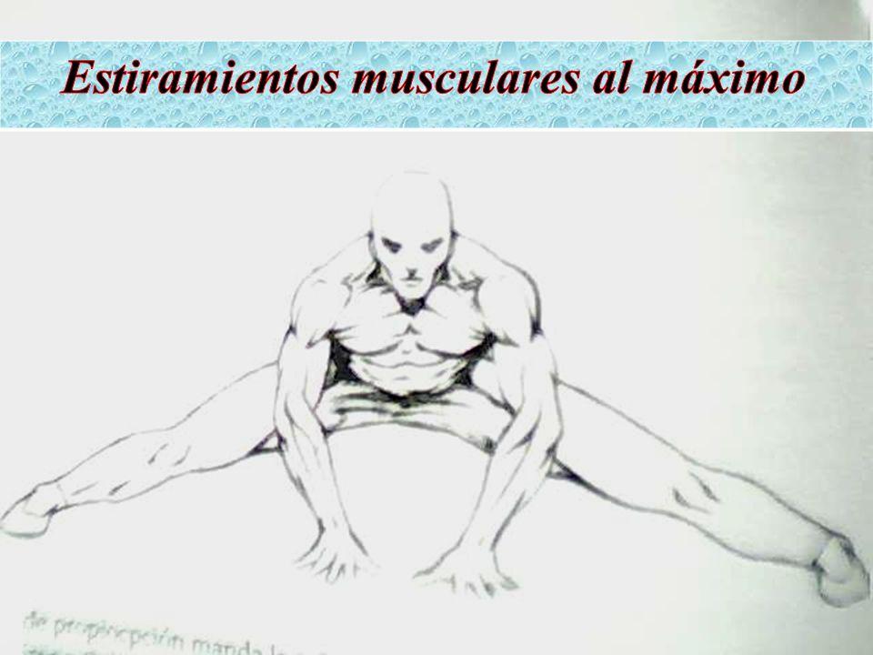Estiramientos musculares al máximo