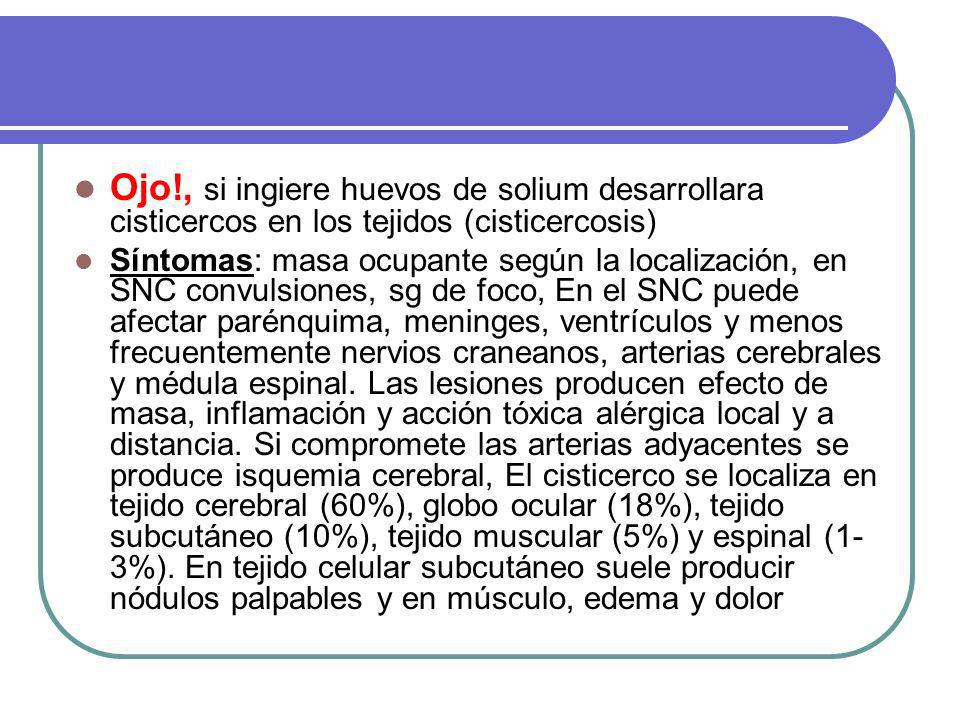 Ojo!, si ingiere huevos de solium desarrollara cisticercos en los tejidos (cisticercosis)
