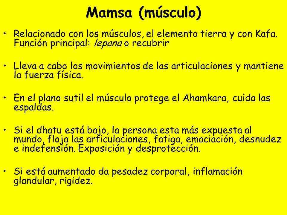 Mamsa (músculo)Relacionado con los músculos, el elemento tierra y con Kafa. Función principal: lepana o recubrir.
