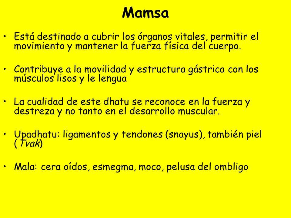 Mamsa Está destinado a cubrir los órganos vitales, permitir el movimiento y mantener la fuerza física del cuerpo.