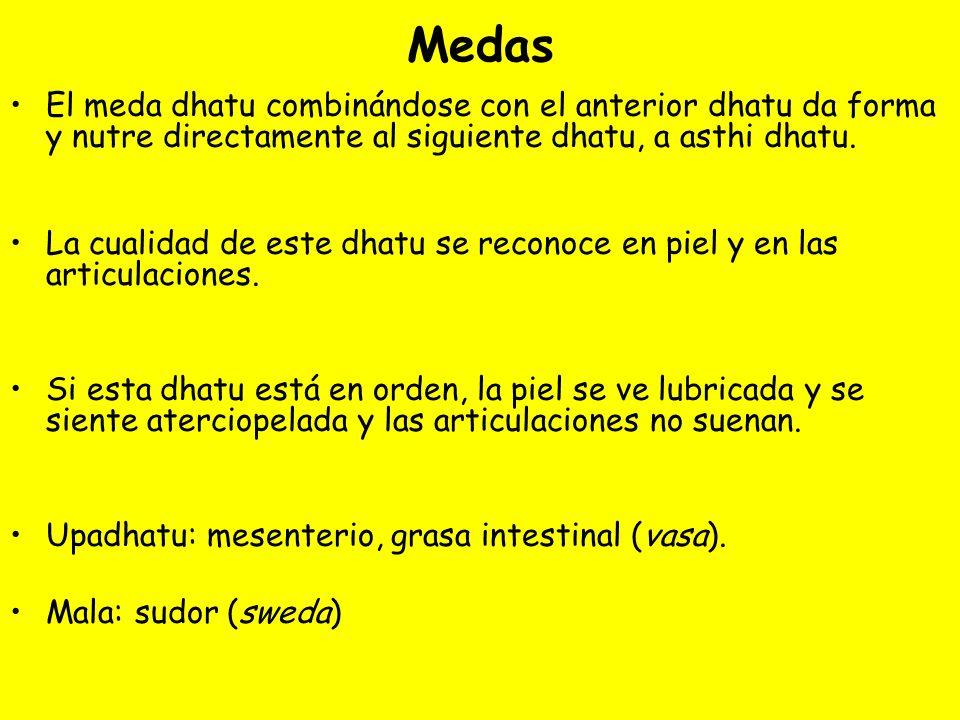 MedasEl meda dhatu combinándose con el anterior dhatu da forma y nutre directamente al siguiente dhatu, a asthi dhatu.