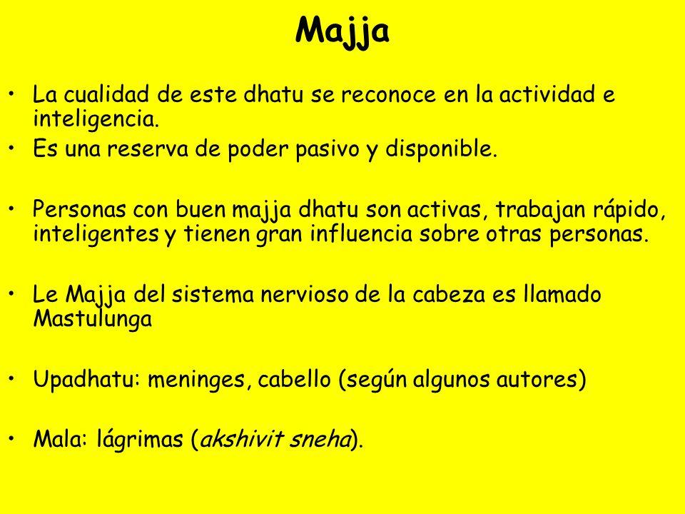 MajjaLa cualidad de este dhatu se reconoce en la actividad e inteligencia. Es una reserva de poder pasivo y disponible.