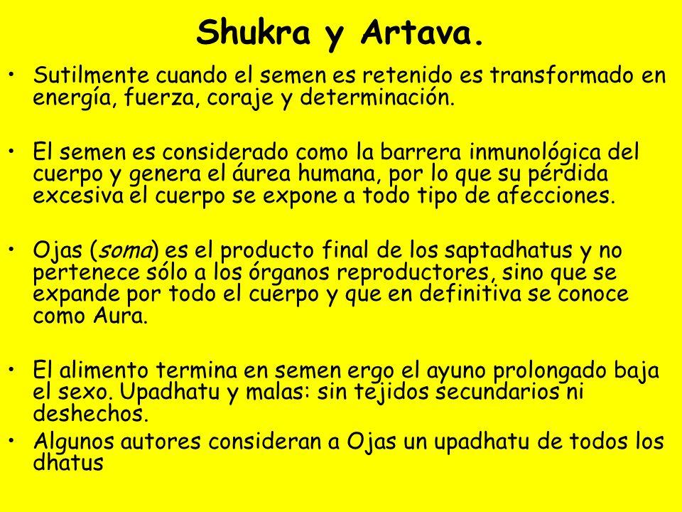 Shukra y Artava. Sutilmente cuando el semen es retenido es transformado en energía, fuerza, coraje y determinación.