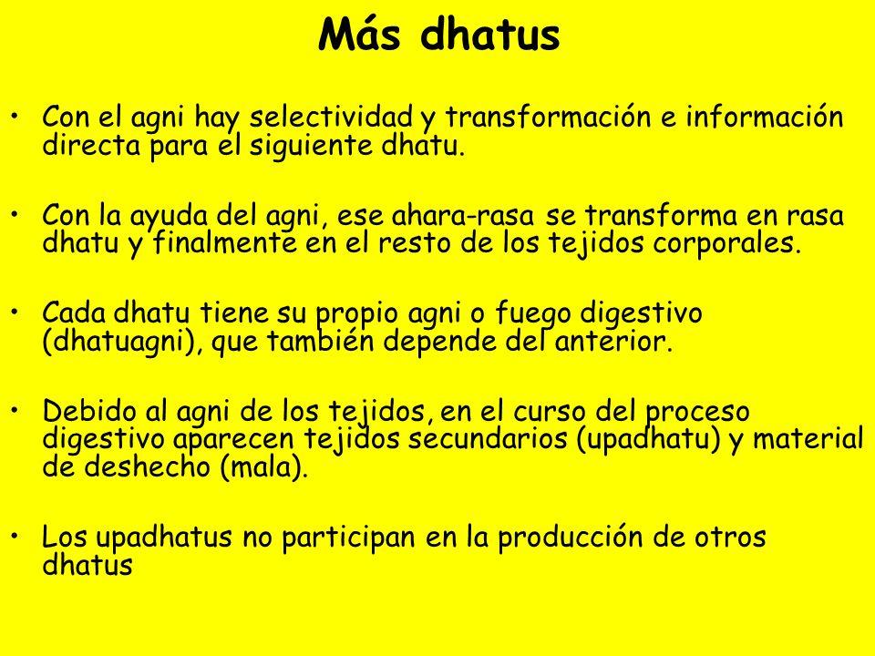 Más dhatus Con el agni hay selectividad y transformación e información directa para el siguiente dhatu.