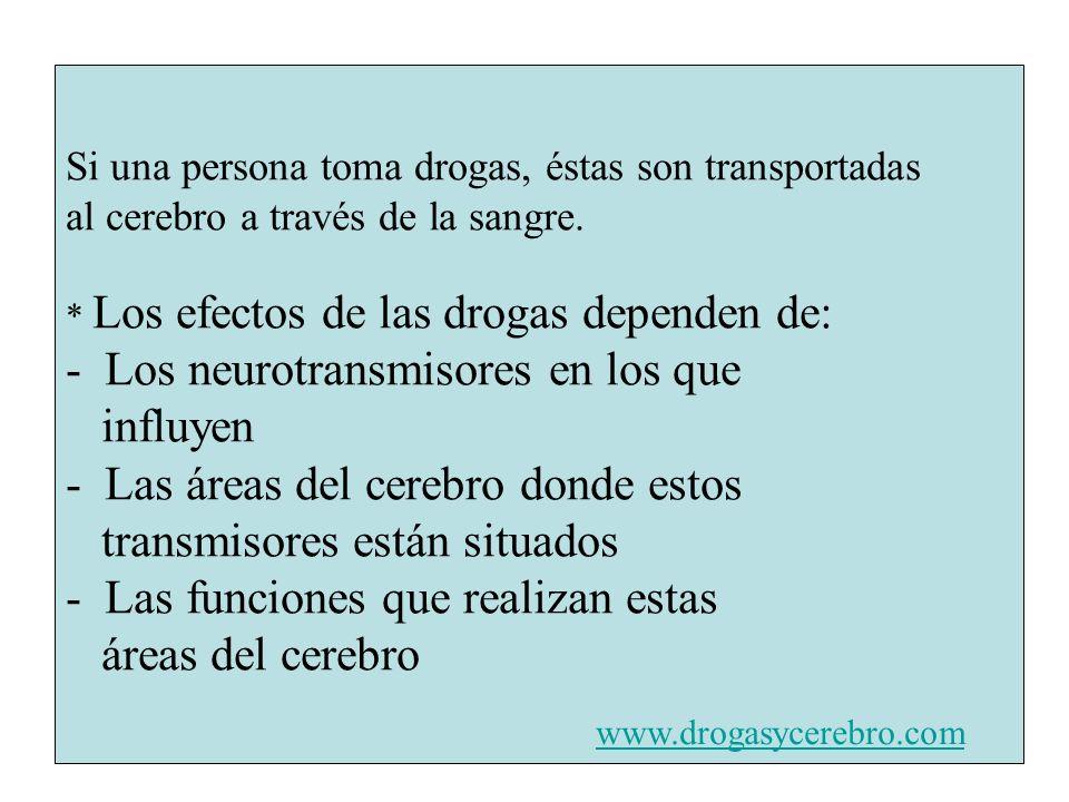 - Los neurotransmisores en los que influyen