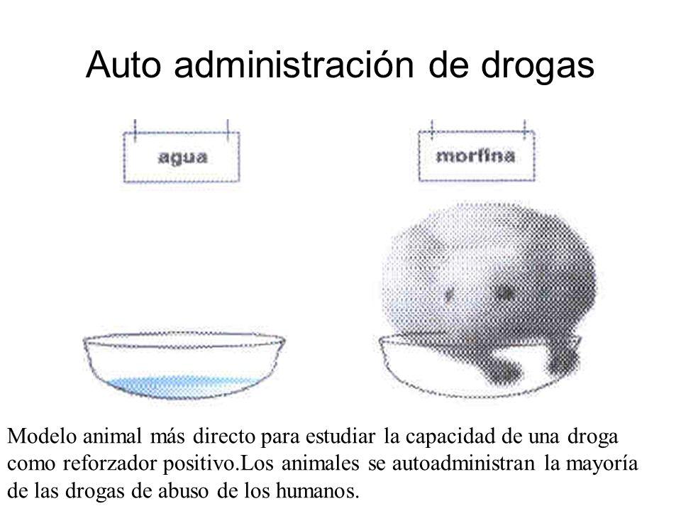 Auto administración de drogas