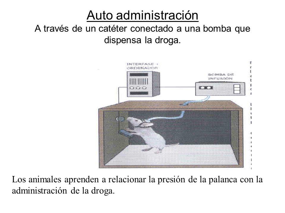 Auto administración A través de un catéter conectado a una bomba que dispensa la droga.