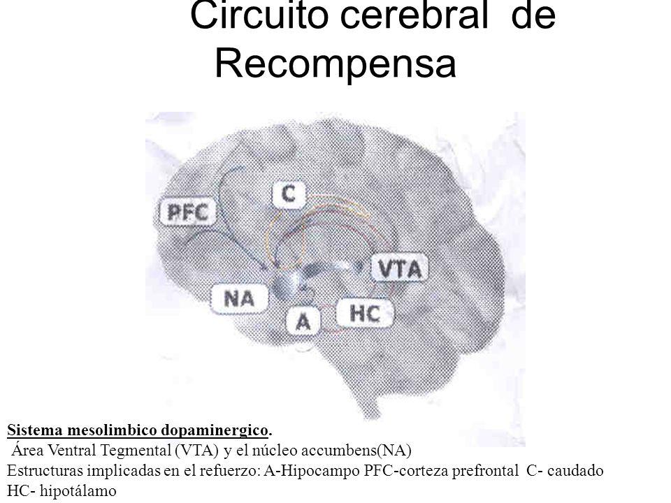 Circuito cerebral de Recompensa