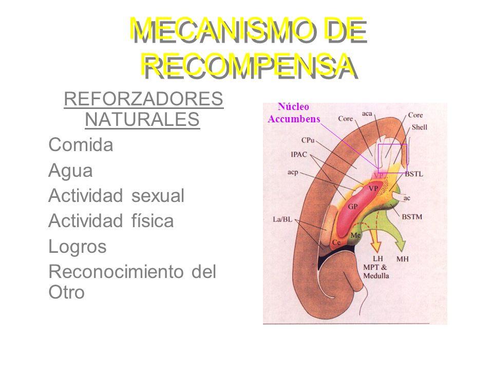 MECANISMO DE RECOMPENSA