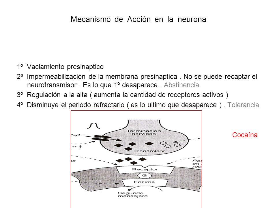 Mecanismo de Acción en la neurona