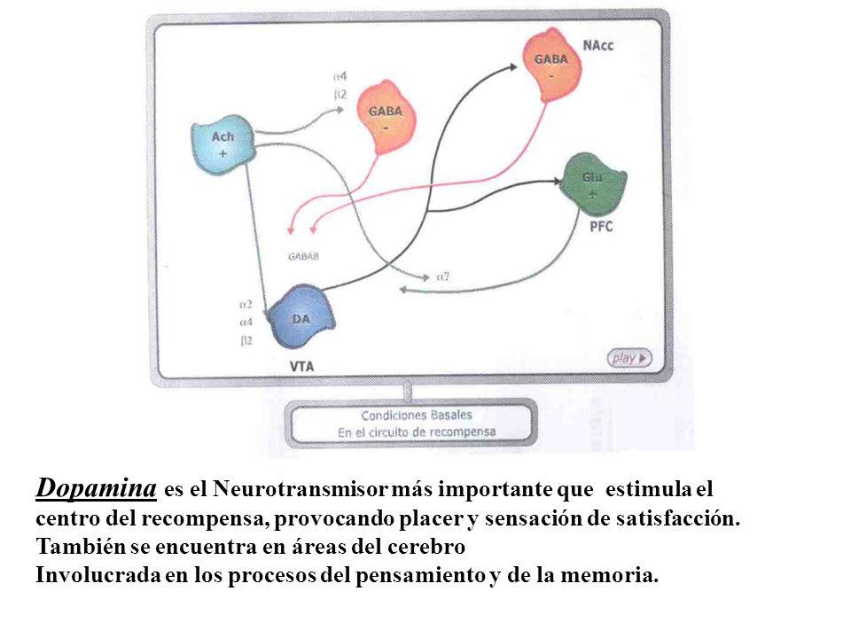 Dopamina es el Neurotransmisor más importante que estimula el