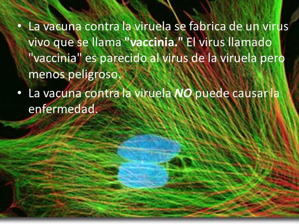 La vacuna contra la viruela se fabrica de un virus vivo que se llama vaccinia. El virus llamado vaccinia es parecido al virus de la viruela pero menos peligroso.