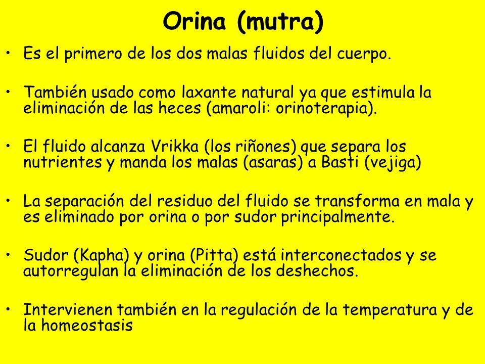Orina (mutra) Es el primero de los dos malas fluidos del cuerpo.